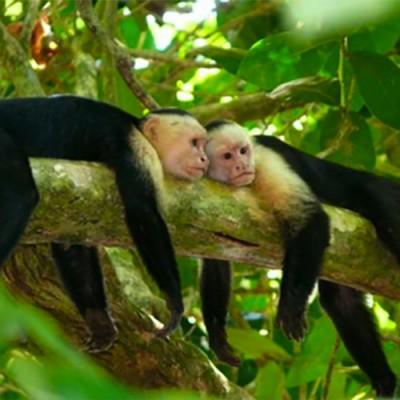 monkey_tour