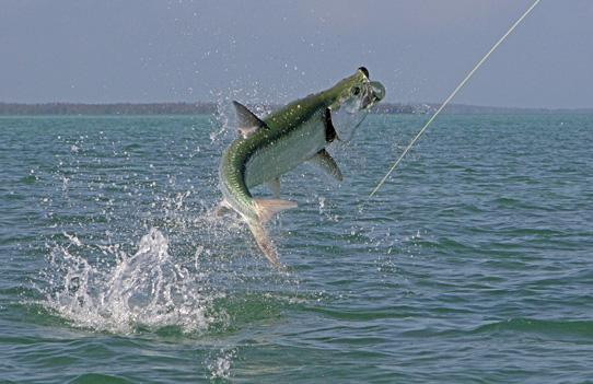 St Petersburg Fishing Charters | YACHTFISH - Guaranteed Fish Everytime