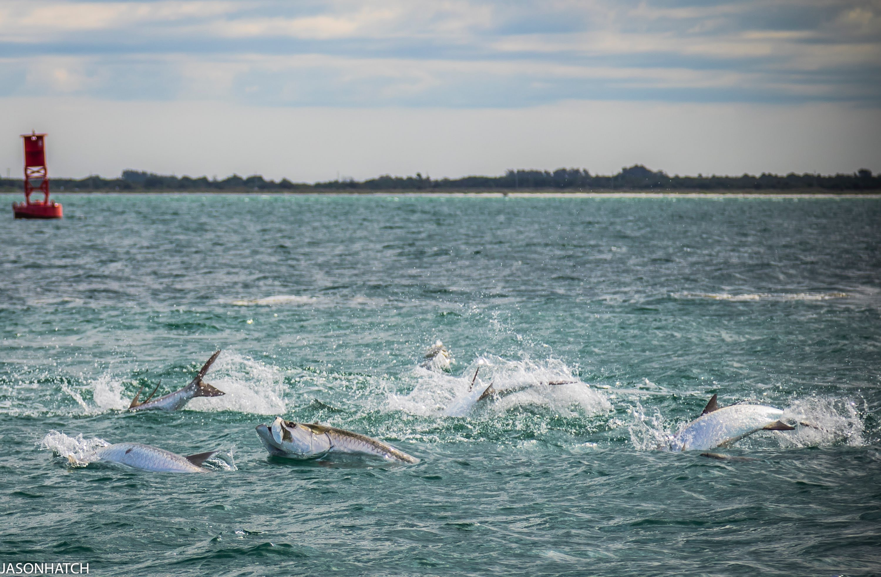 Tarpon Fishing Charter in St Petersburg